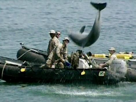 Beaucoup pensent qu'en cas de guerre avec l'Iran, Washington n'hésiterait pas à envoyer ses dauphins en mission dans les ports iraniens.