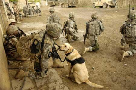 Un chien accompagne des soldats américains lors d'une mission en Irak, en 2003.