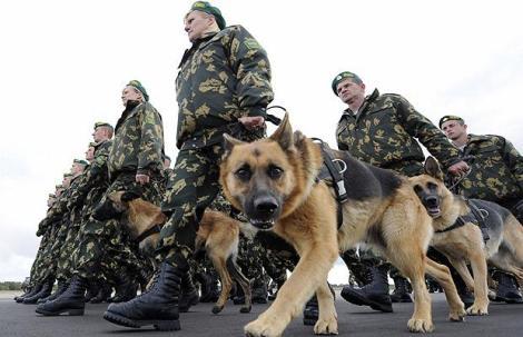 Armée russe. Le berger allemand est un des chiens les plus appréciés des militaires.